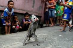 This Monkey Hears Evil