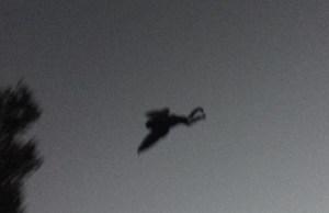 mothman-photo