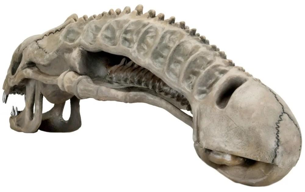 xenomorph-skull-2