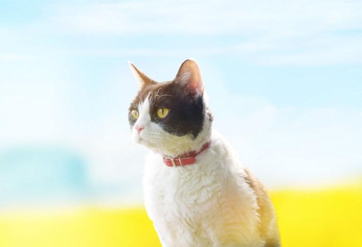 Travelling Cat 01