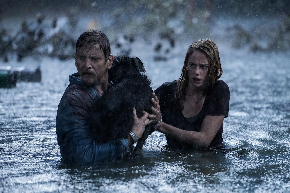 Interview: Alexandre Aja Explains the Fate of the Dog in 'Crawl' [Spoilers] - Bloody Disgusting