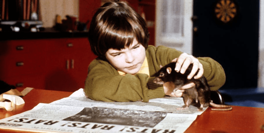 Tear It Up: Revisiting the Rat-Infested Cult of 'Willard' - Bloody  Disgusting