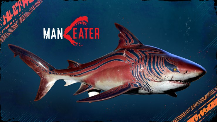 'Maneater': Tiger Shark