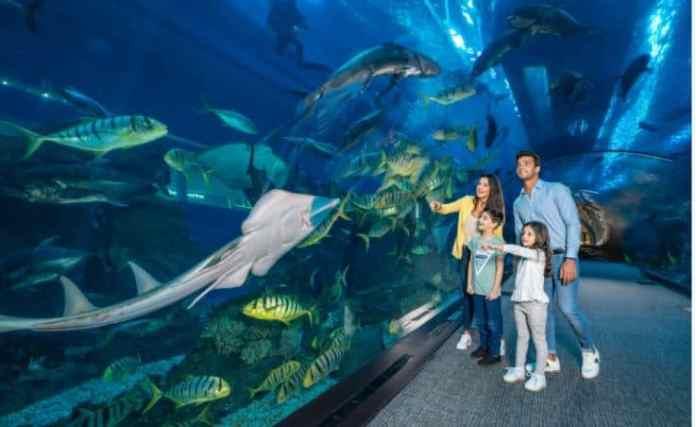 Dubai Aquarium Emaar Entertainment