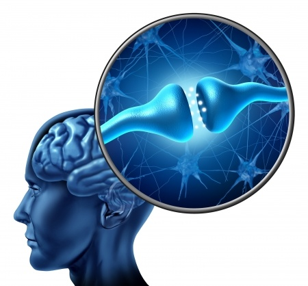 BrainSynapse