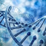 In autoimmune diseases affecting millions, researchers pinpoint genetic risks, cellular culprits