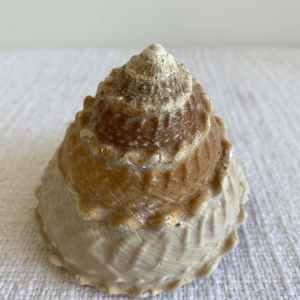 Natural Real Shells