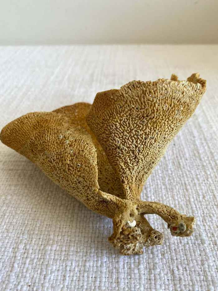 Natural Curled Sea Sponge