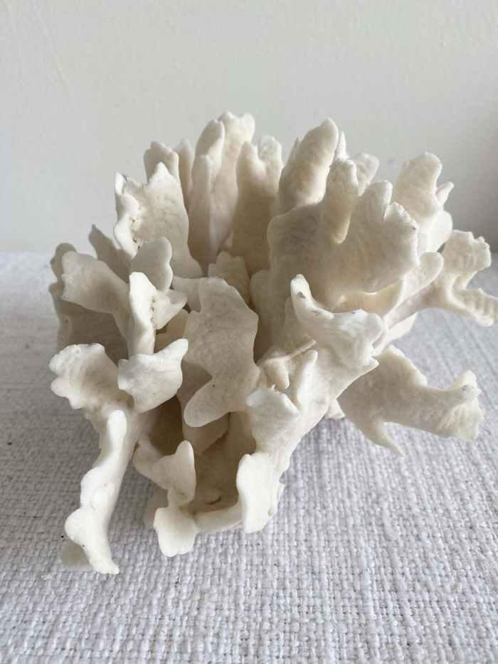 White Natural Coral