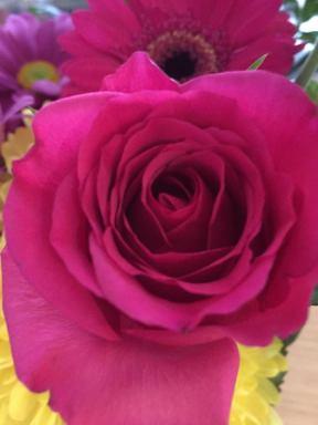 Sainsburys Rose 1