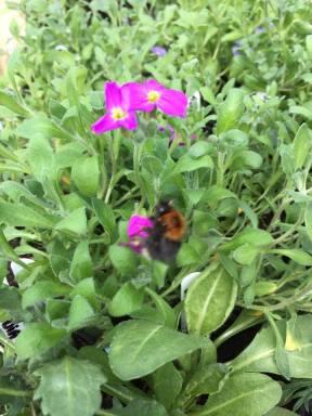 Bee 0504162