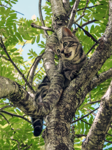 stuck, fear, cat