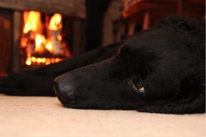 cozy, stuck inside, fireplace, comfort, safety