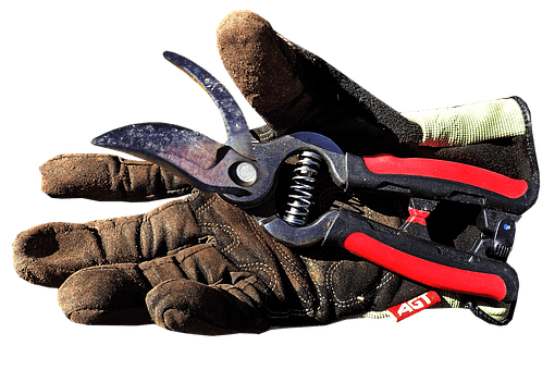 how to prune fuchsias, pruning fuchsias, garden shears and garden gloves