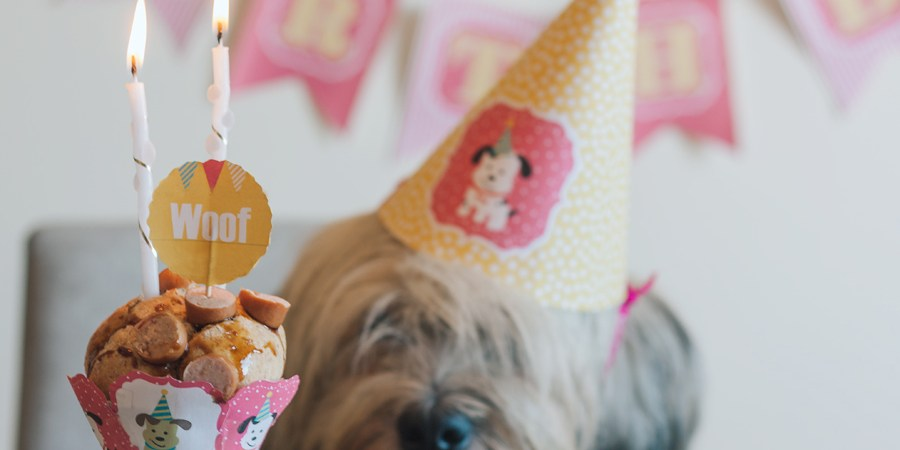 Dog, Birthday