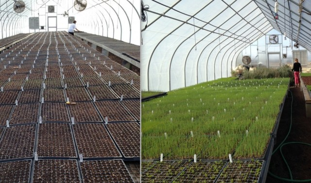 The greening of the greenhouses from March to April.