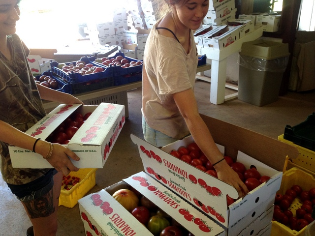 Melissa and Emma are packing tomatoes for wholesale accounts like Zone 7 and Ambrogi's.