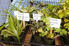 plants_fotor