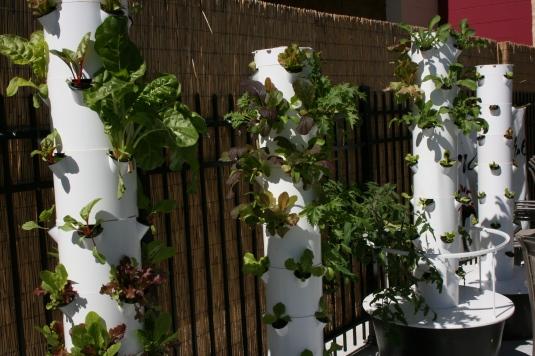 salad-wall