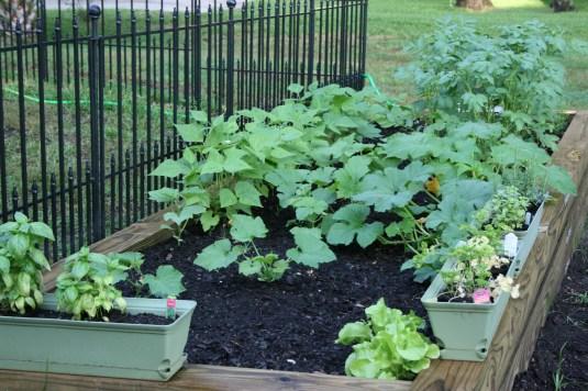 Ashley's beautiful garden