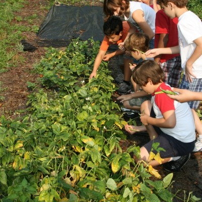 Learning How to Save Seeds