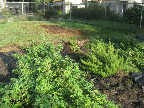Our school garden with new pumpkin patch addition.jpg