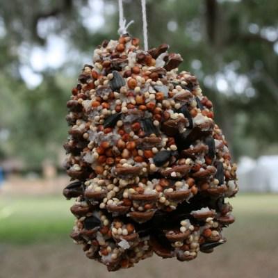 Making Bird Seed Ornaments/Feeders
