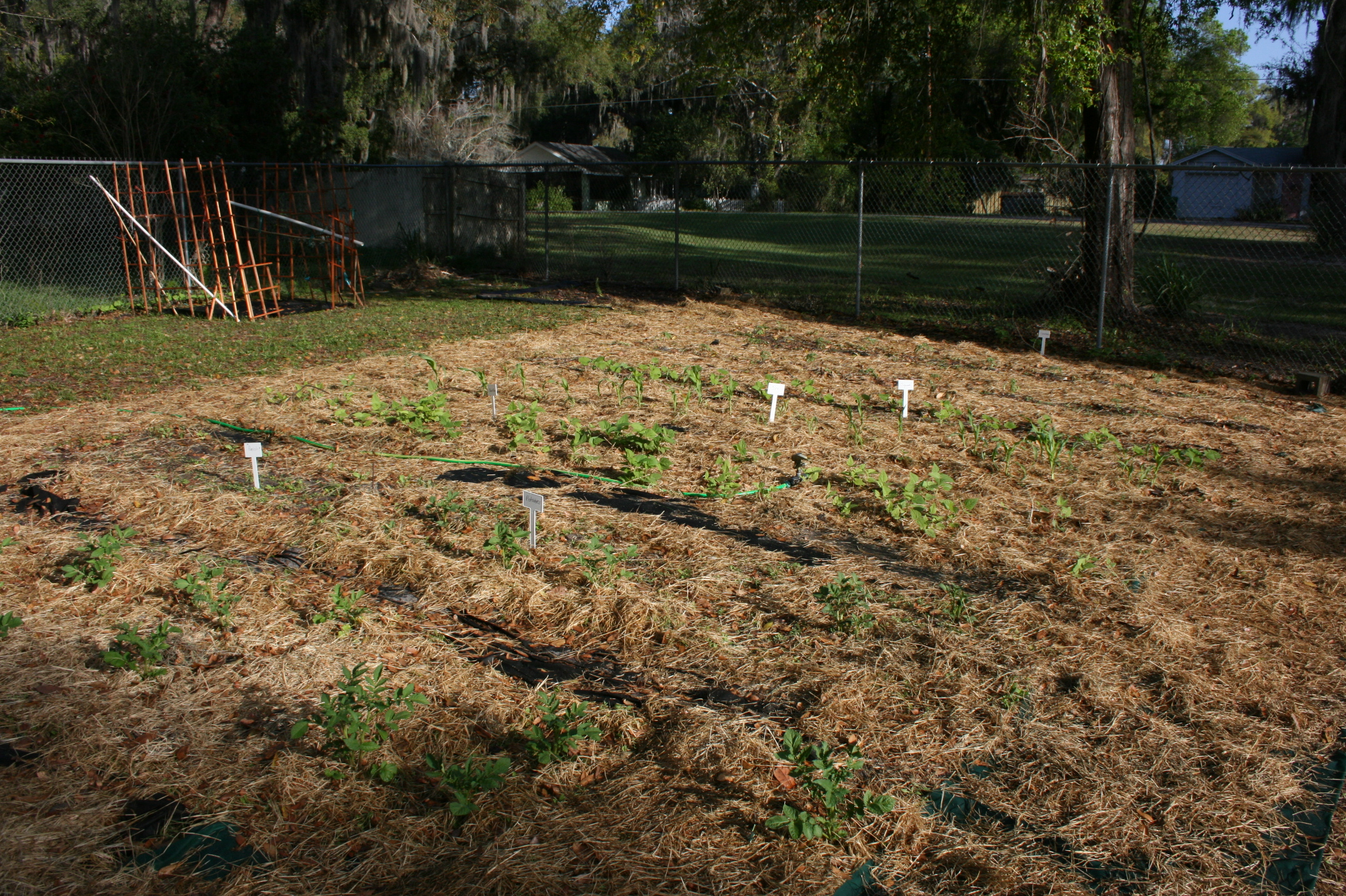 School Gardens Rock with Fun and Learning for Students