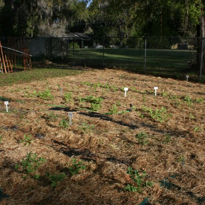 School Gardens Rock with Fun and Learning