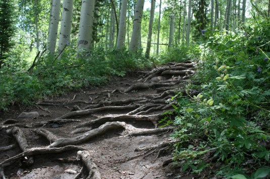 Nature's trail steps