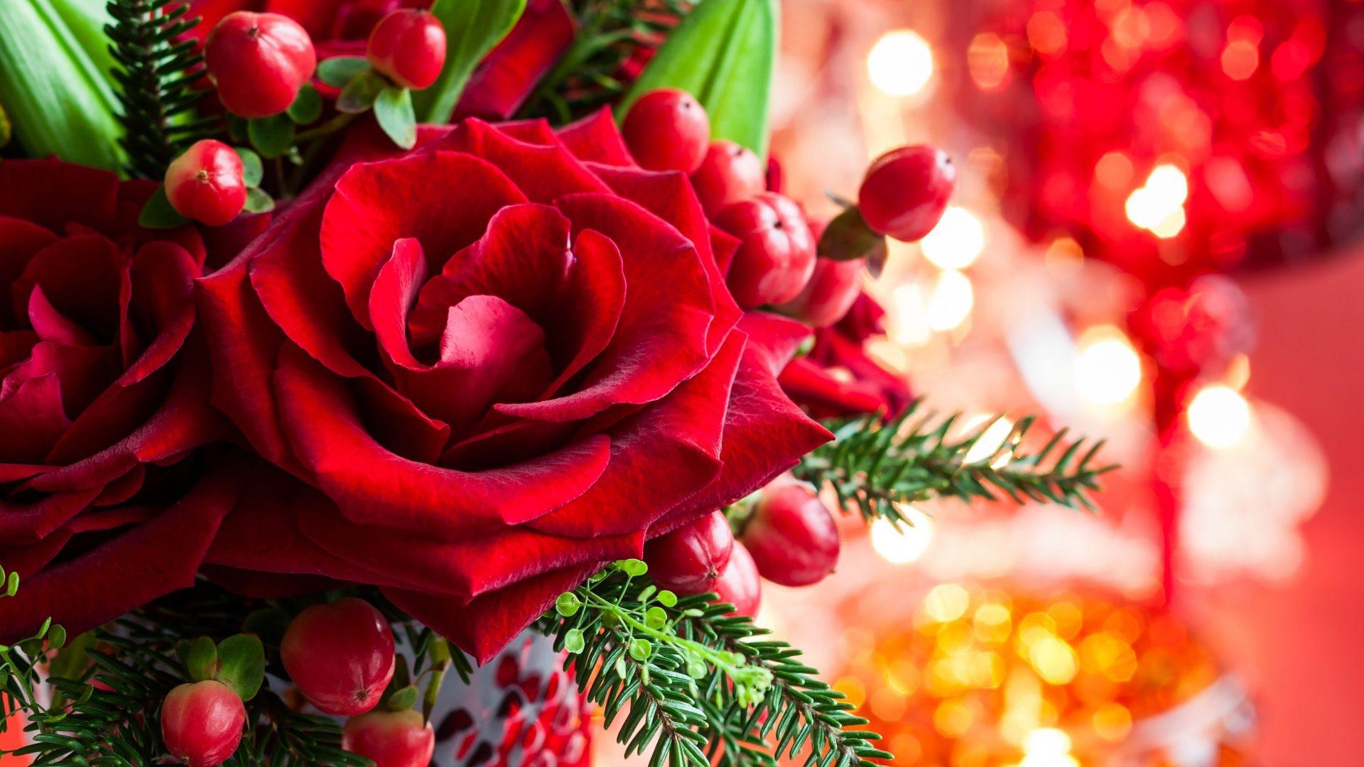 Magic Love Bokeh Red Xmas Roses Merry Rose Christmas