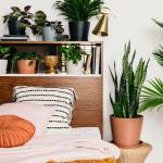 Best Plants For Your Bedroom Bloomscape