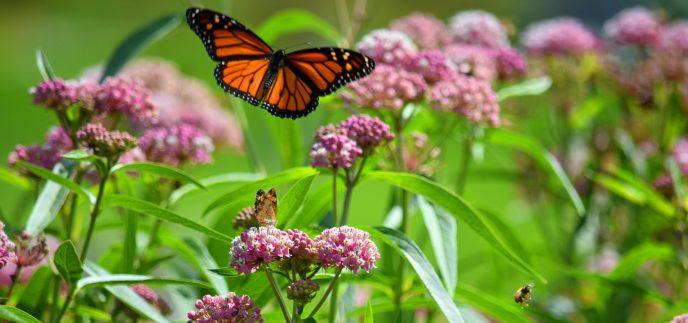Pollinator Garden @ Noelridge Gardens
