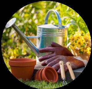 Watering & Fertilizing Guidelines