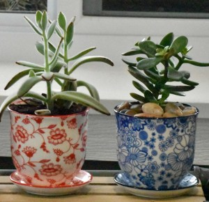 Planting Kits for Kids Pots and Plants