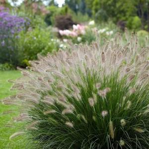 Grasses Link