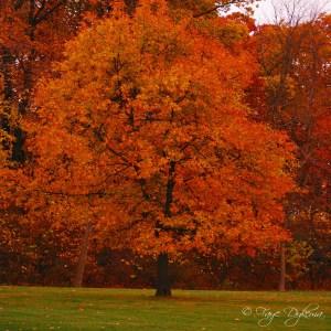 Autumn Tree Link