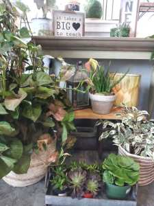 Pathos, Succulents, Cactus