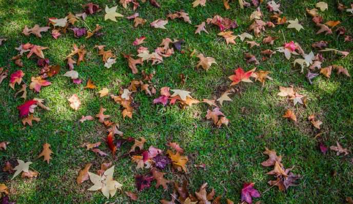 pexels-photo-2170353