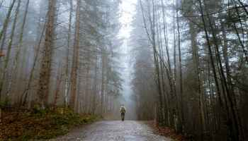 man walking in nature which is the best meditation for stress