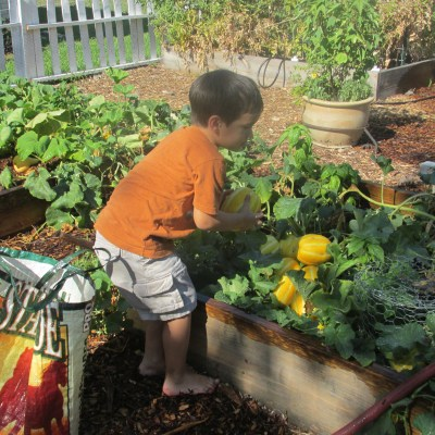 Getting your kids interested in gardening: My Rabbit Shepherd