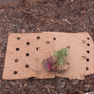Cardboard planting guides. Work well when gardening with kids too.