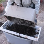 "Panning for ""Black Gold""; Harvesting the Vermicomposting Bin."