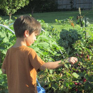 Picking blackberries with my best garden helper.