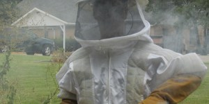 Africanized bees! Re-queening the Hive!