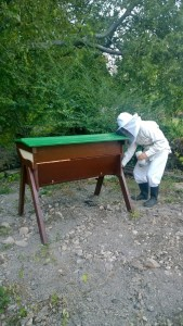 Getting the hive ready for new bees by putting sugar syrup in for them while they are shut in.