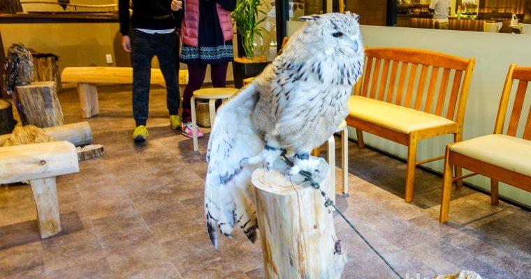 Osaka Owl Cafe – It's a hoot!