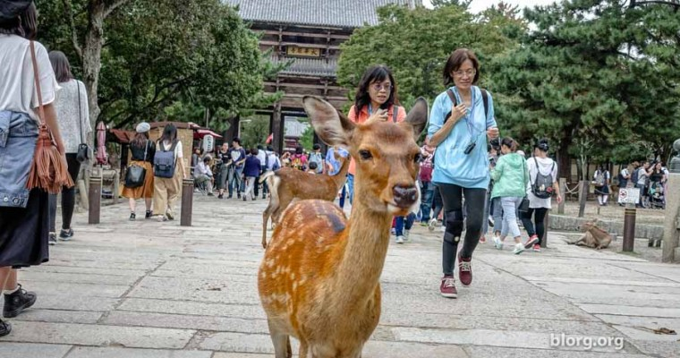 Nara Deer Park: You Can Meet Friendly/Unfriendly Deer For Free