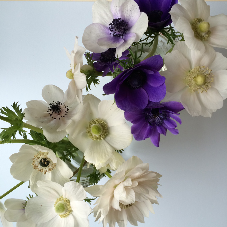 Beautiful Anemones at BlossomandBranchNC.com