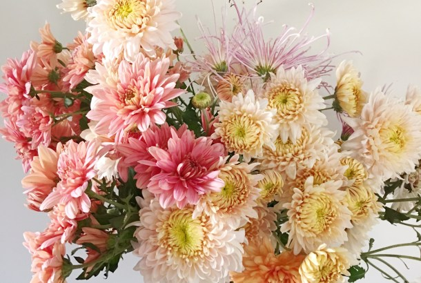 Heirloom Mums: Queen of the Fall Flowers